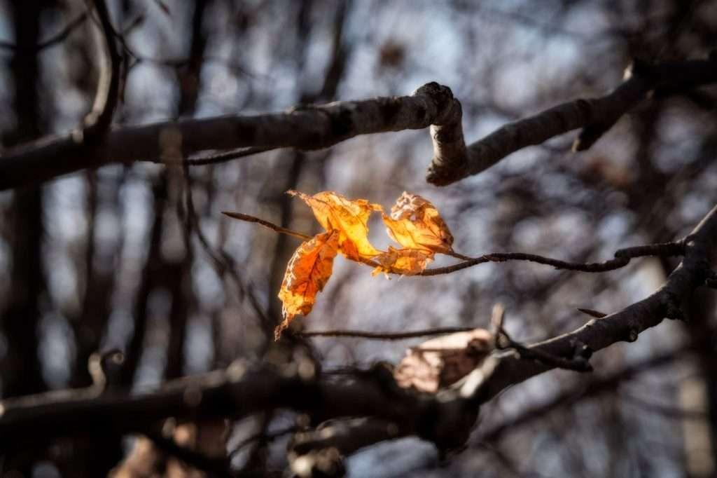 Il foliage di Elcito. Foliage nelle Marche.